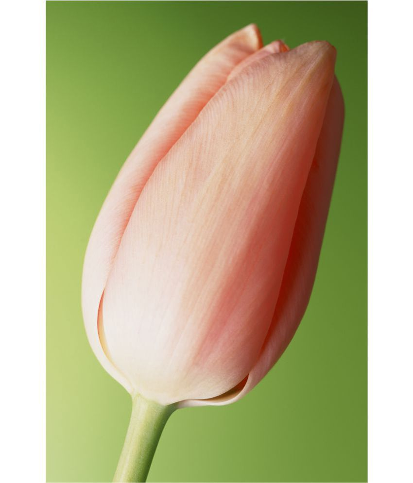 ArtRetcomm Art Digital Print Wall Art Pink Tulip Floral Painting