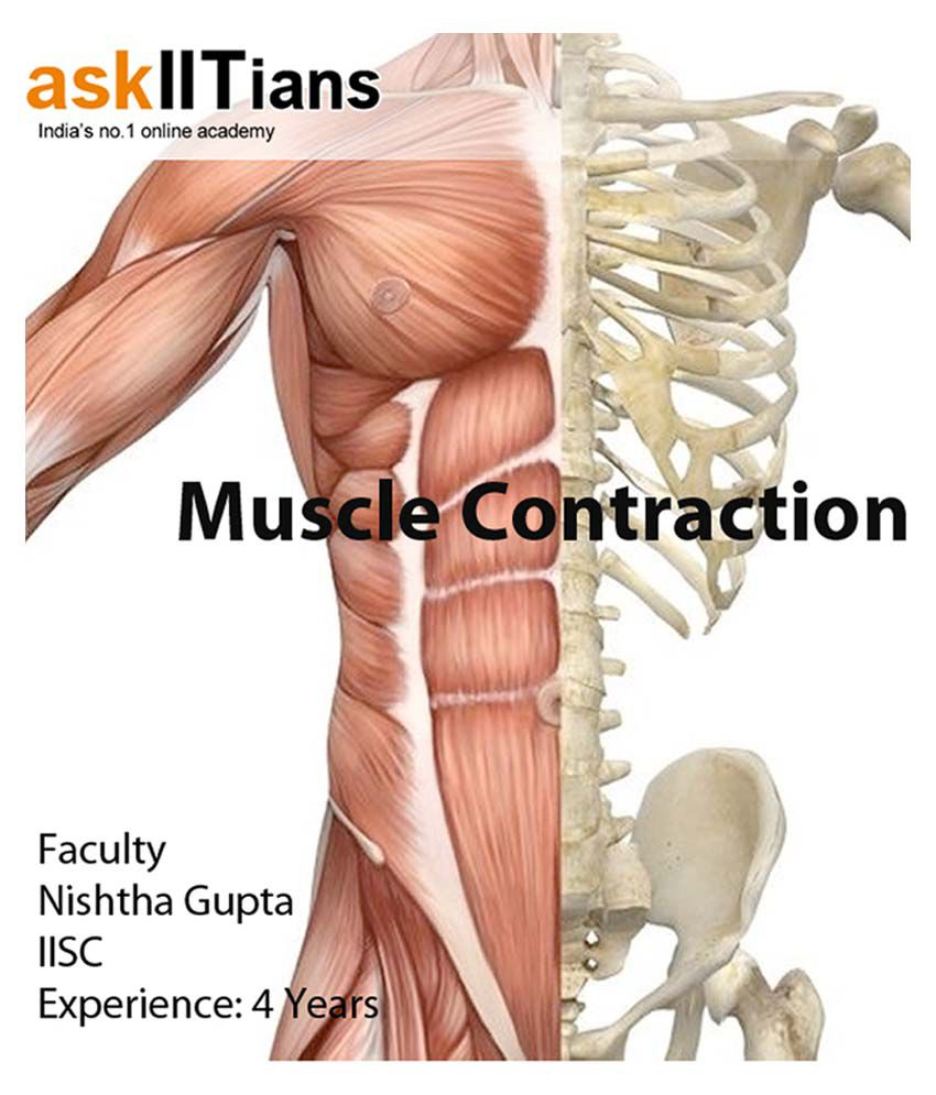 Complete Muscle Contraction Online Course For Aipmtaiimsclass 12