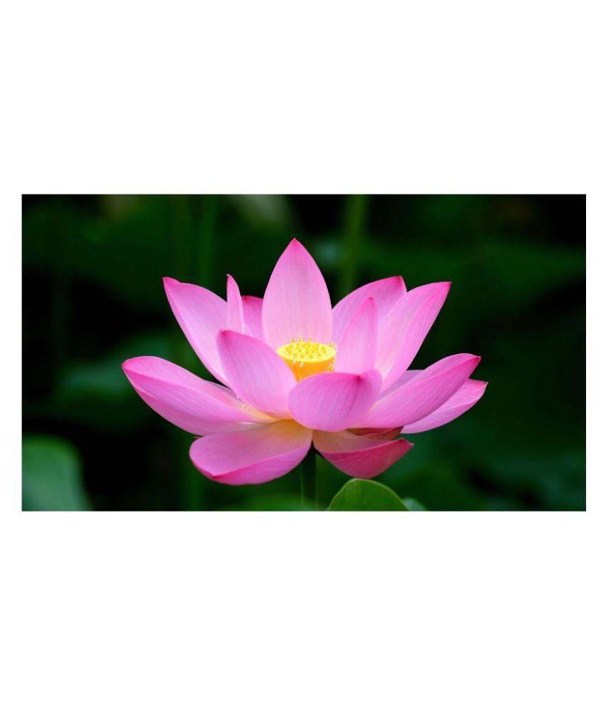 Sa Heli Pink Lotus Flower Seed Buy Sa Heli Pink Lotus Flower Seed