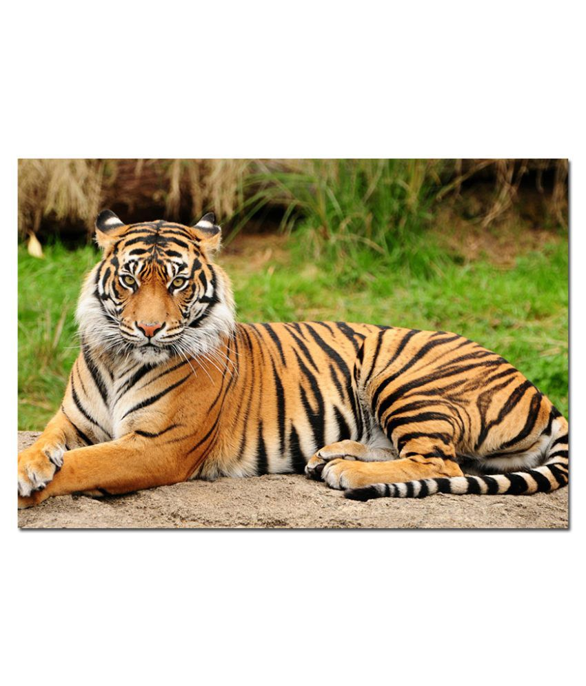 Anwesha's Water Active Wallpaper Poster 20 Inch X 30 Inch - Tiger T021