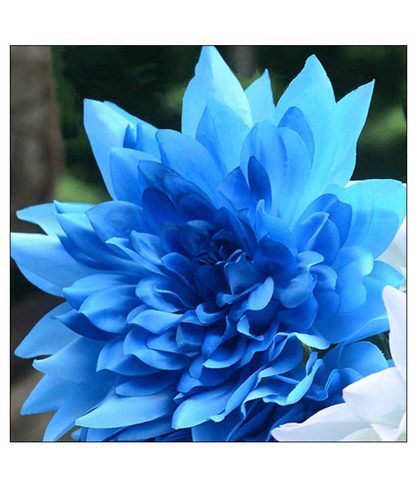 Futaba Blue Dahlia Flower Seeds Buy Futaba Blue Dahlia Flower Seeds