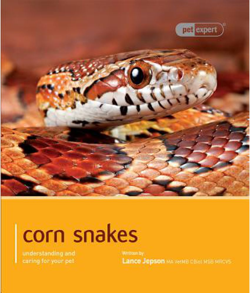 Corn Snake Buy Corn Snake Online At Low Price In India On Snapdeal
