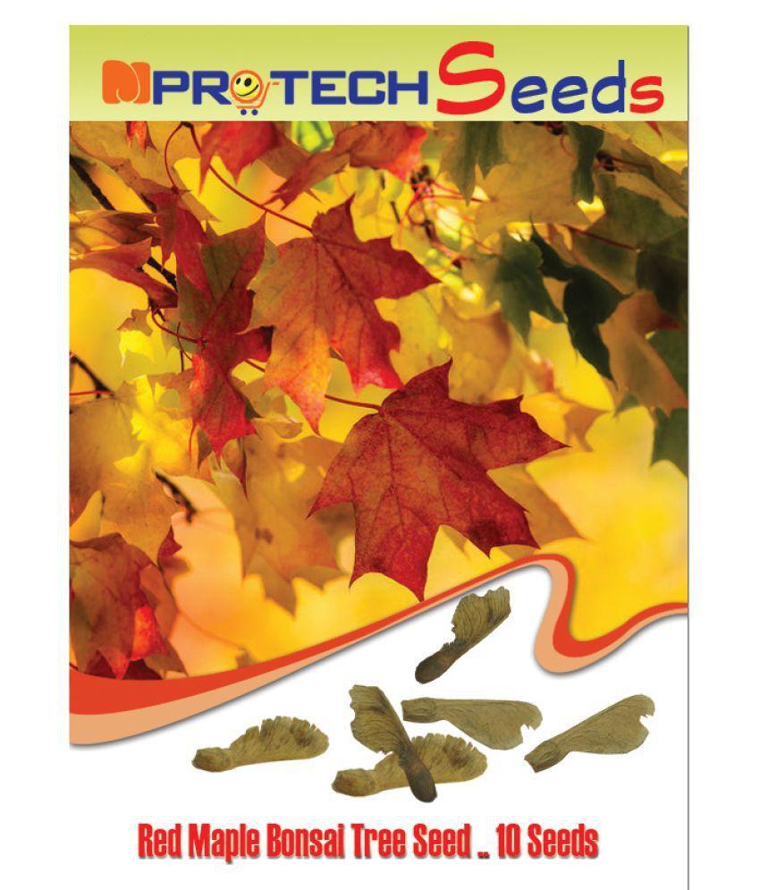 Mpro Tech Acer Rubrum Red Maple Tree Seed Buy Mpro Tech Acer Rubrum