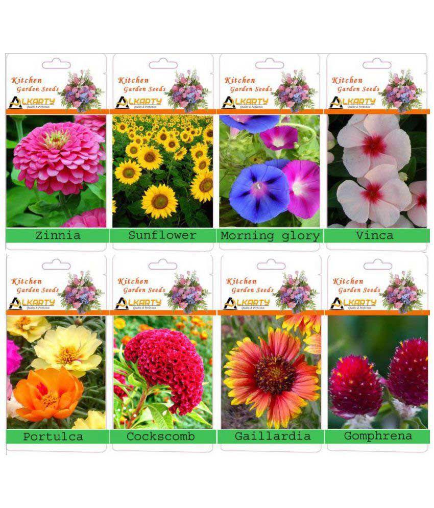 alkarty flower seeds: buy alkarty flower seeds online at low price