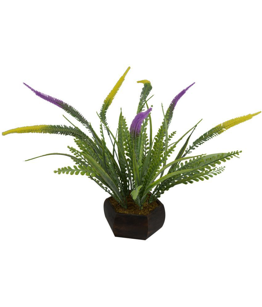 The Fancy Mart Grass Fern small 1 bunch wd small pot Multicolour Greens With Pot Plastic