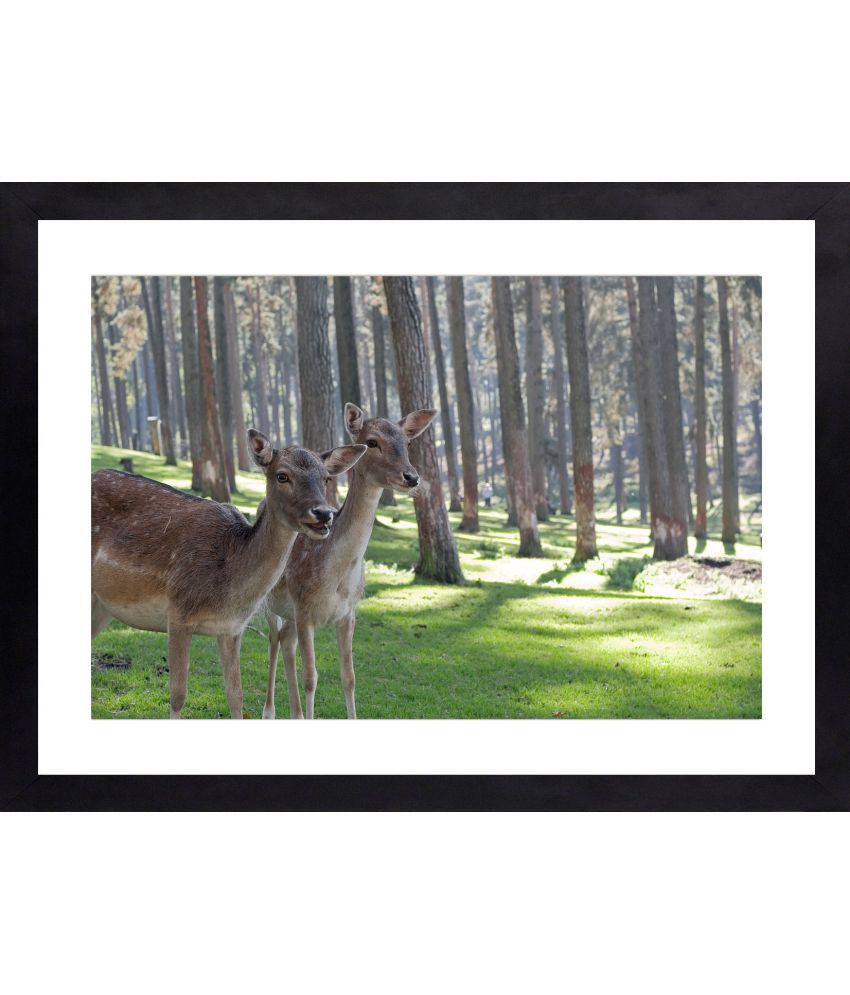 Craftsfest Amazing Couple of Dear Canvas Painting With Frame Single Piece