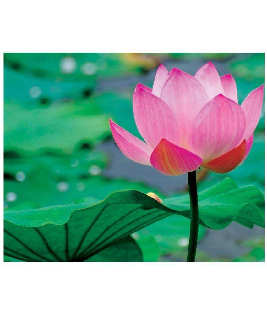 Lotus Flower Order Online Best Image Of Flower Mojoimage