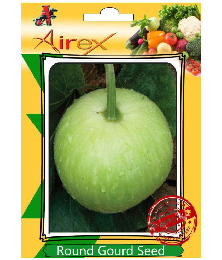 da9d659f2c15 Airex Round Gourd (tinda) Vegetable Seeds  Buy Airex Round Gourd (tinda)  Vegetable Seeds Online at Low Price - Snapdeal