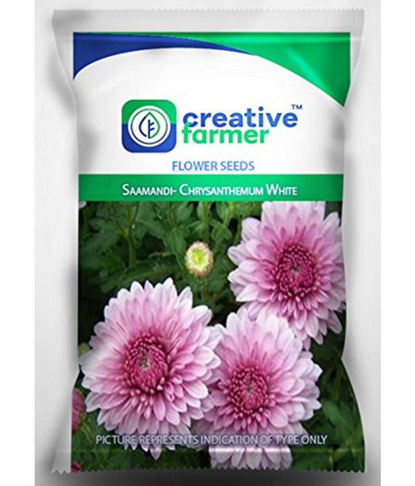 Creative farmer saamandi chrysanthemum white 50 seeds flower seeds mightylinksfo
