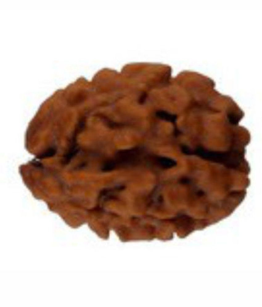 Certified Best Quality Nepal 2 Face Rudraksha