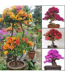 Garden Plants: Buy Garden Plants, Gardening Tools Online at