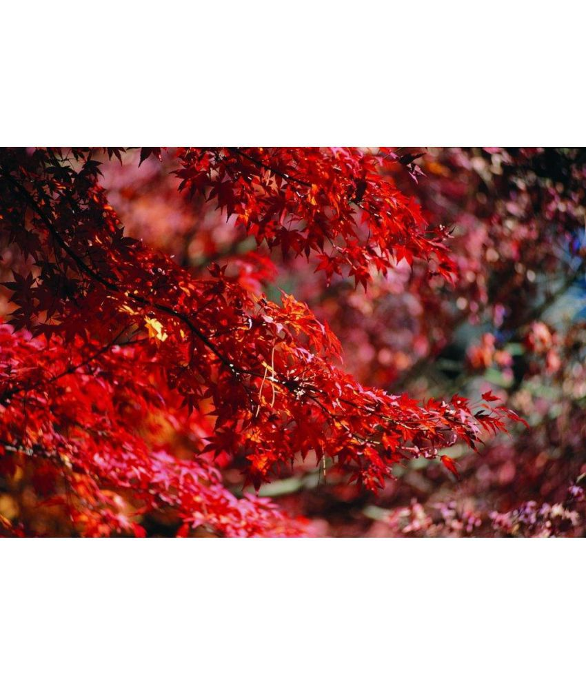 Vitalwalls Scenery Leaves and Trees Canvas Painting Without Frame