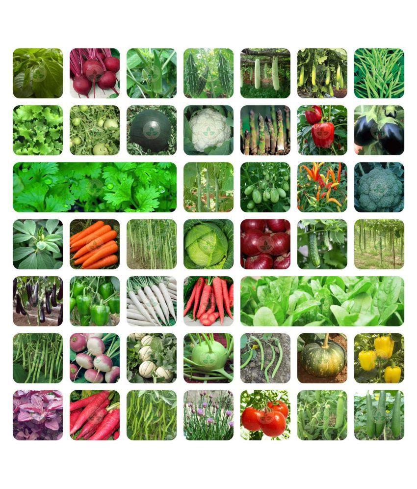 Aero Seeds 45 Variety (3500+ seeds) Of Vegetable Seeds
