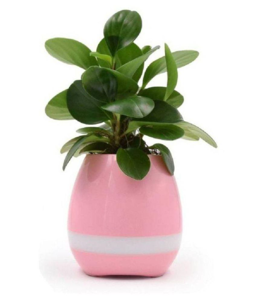 Ibs Bluetooth Musical Sound On Touching Plant Leaf Outdoor Flower Pot