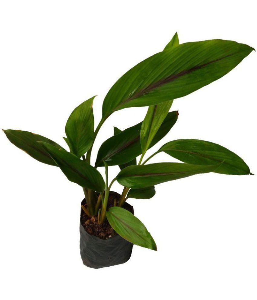PATPERT AGROTECH Outdoor Herbs