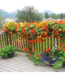 creative farmer plants gardening buy creative farmer plants rh snapdeal com