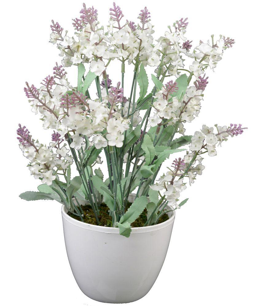 Thefancymart Hyderanga White Greens With Pot Plastic - Pack of 1