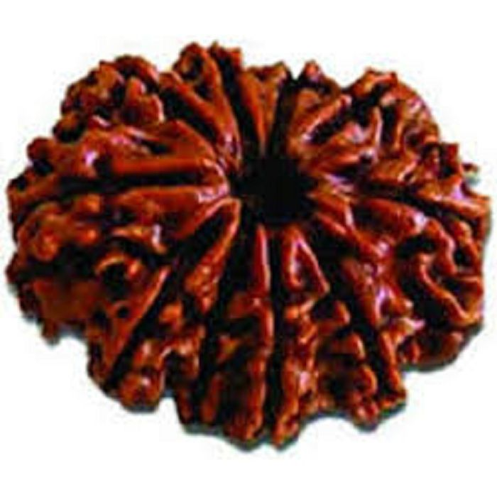 9STARS GALLERY  Nepal 10 Mukhi Valuable Rudraksha With Silver Pendant  Lab By Certified