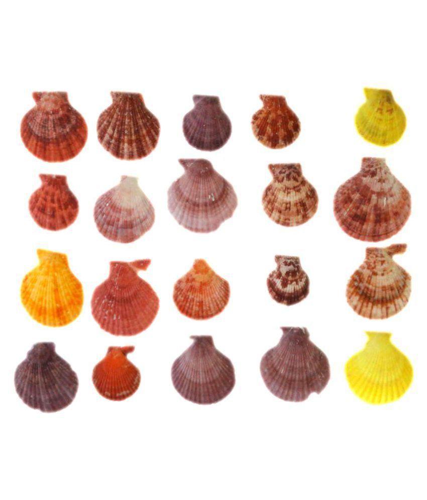 STE Multi color Sea Shells for Home Decor, Aquarium, Pack of 20