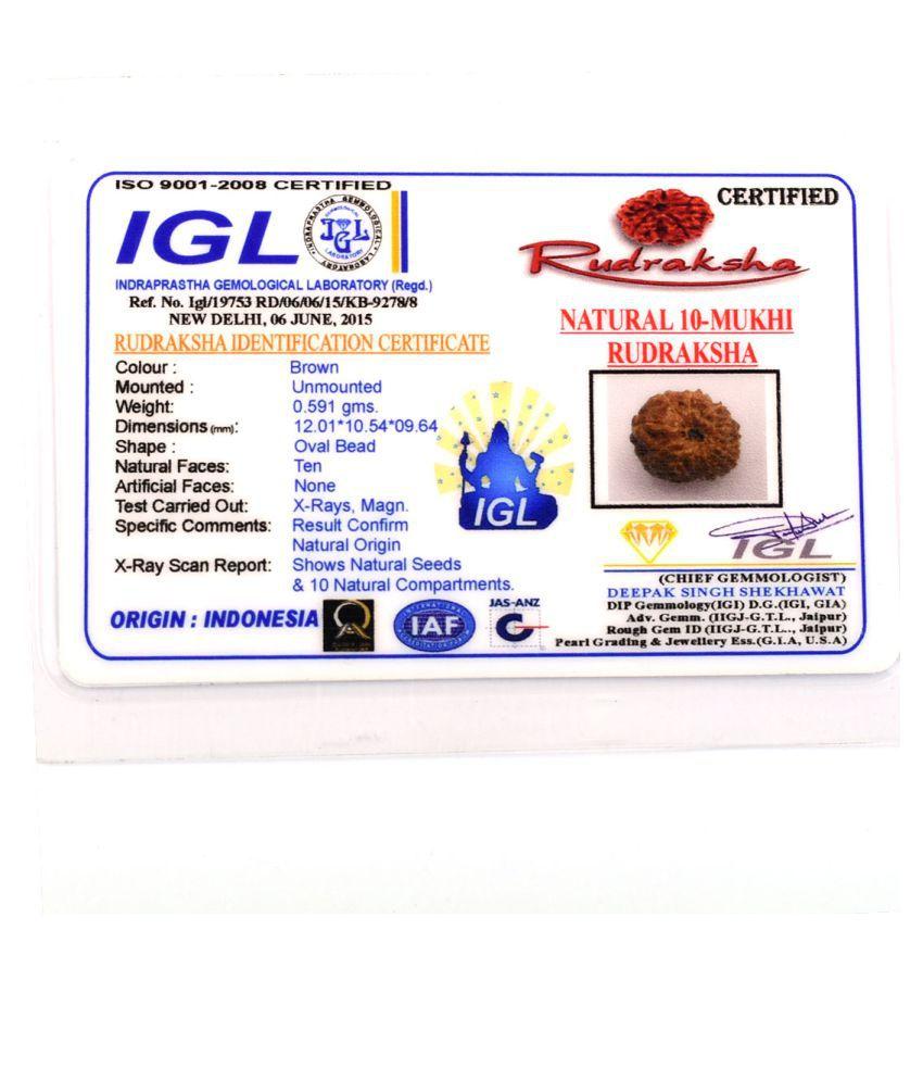 Avaatar Certified 10 Mukhi Natural Rudraksha Bead
