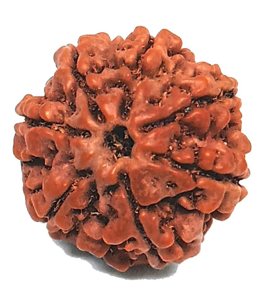Unicop Energized, Powerful And Natural Original 7 Mukhi Rudraksha For Man/ Women 100% Original And Science Certified Rameswaram Oriented Wood Bead For peace of mind and emotional stability