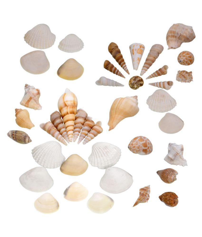 300gram Multi Colored Beautiful Natural Sea Shells for Aquariums/Art & Crafts/Home Decor/Table Decoration