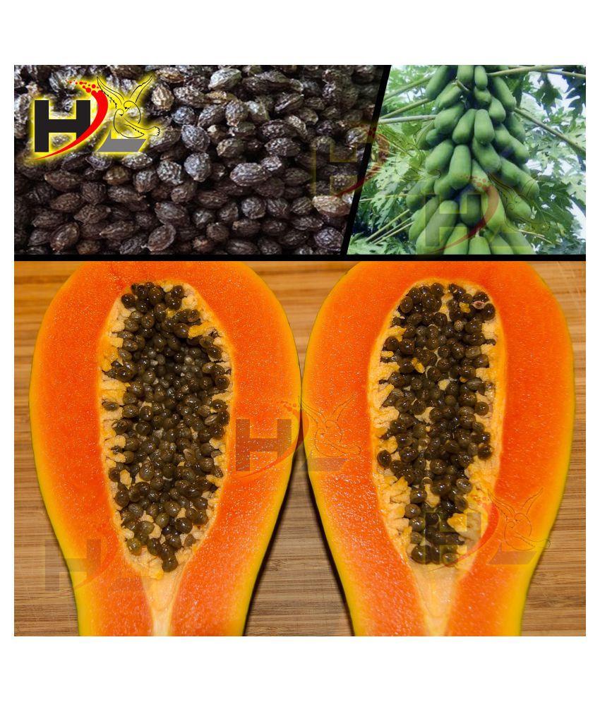 HL. Papaya Seeds 50pcs (Hybrid)