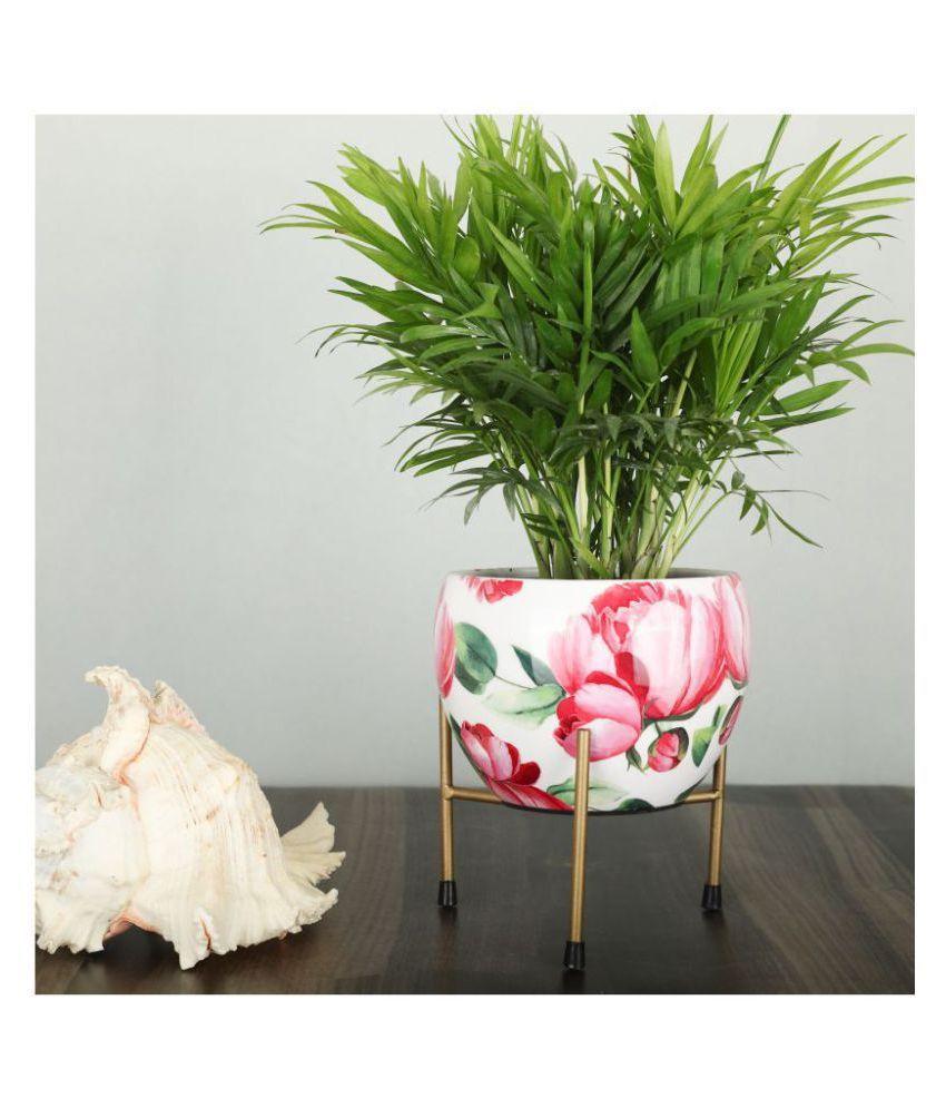 Homspurts Both Flower Pot