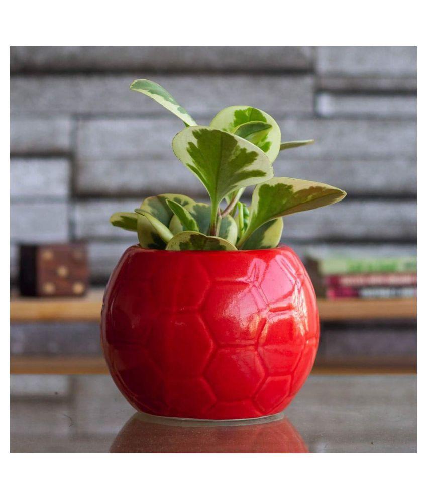 Ugaoo Football Ceramic Pot, Red